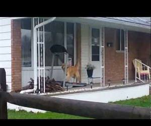 when it is raining but you need your walk Funny Video